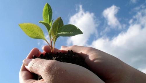 En redes sociales hay que sembrar antes de recoger.